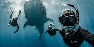 Trải nghiệm lặn độc quyền với những đàn Cá Lớn