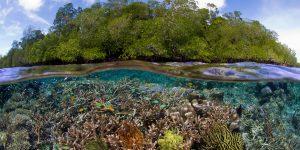 West Papua trở thành tỉnh đầu tiên ở Indonesia đi đầu về bảo tồn tự nhiên