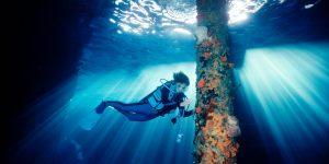 ECOXURY: Nỗ lực bảo tồn đại dương từ Rolex