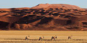 Mạo hiểm kiểu thượng lưu: Kỳ 2 – Đến sa mạc Namibia cùng andBeyond