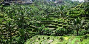 "Amazing Tour số 5: ""Bali – Từ núi lửa xuống biển sâu"""
