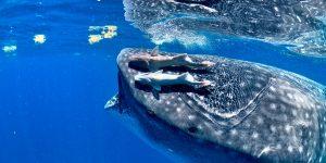 Mạo hiểm kiểu thượng lưu: Phần 5 – Theo dấu đàn cá lớn dọc bờ đông Mexico