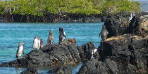 Du lịch đảo Galápagos bằng siêu du thuyền sang trọng