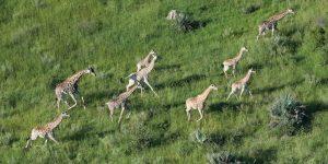 ECOXURY: Top 3 trải nghiệm safari độc đáo nhất mà bạn nên thử khi đến với châu Phi