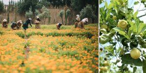 """Khu vườn Ourika tại Morocco: """"Đất thánh"""" trọn đời của Yves Saint Laurent"""