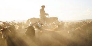 Mông Cổ – Giấc mơ của những nhà thám hiểm hoang dã