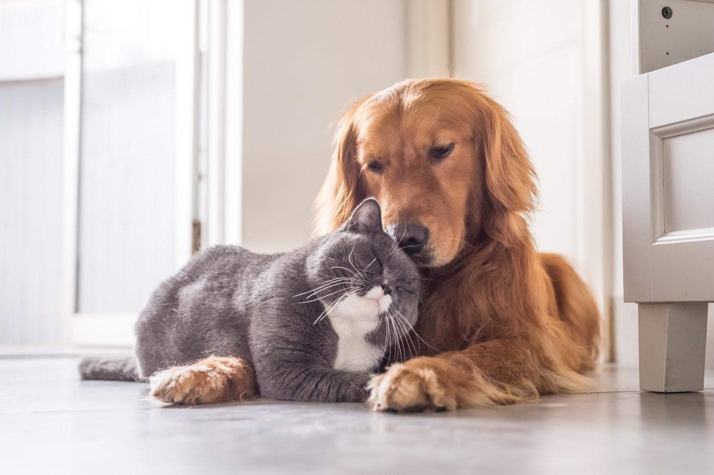 Bạn yêu thú cưng? Hãy tìm đến các loại đồng hồ thân thiện với động ...