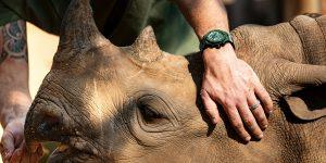 Hublot ra mắt mẫu Big Bang Unico SORAI cùng sứ mệnh bảo vệ loài tê giác